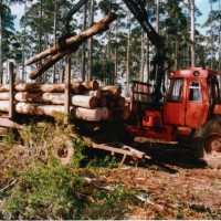 excessive tree thinning